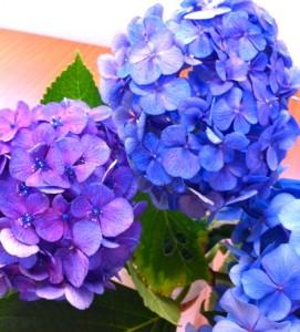 あじさい花